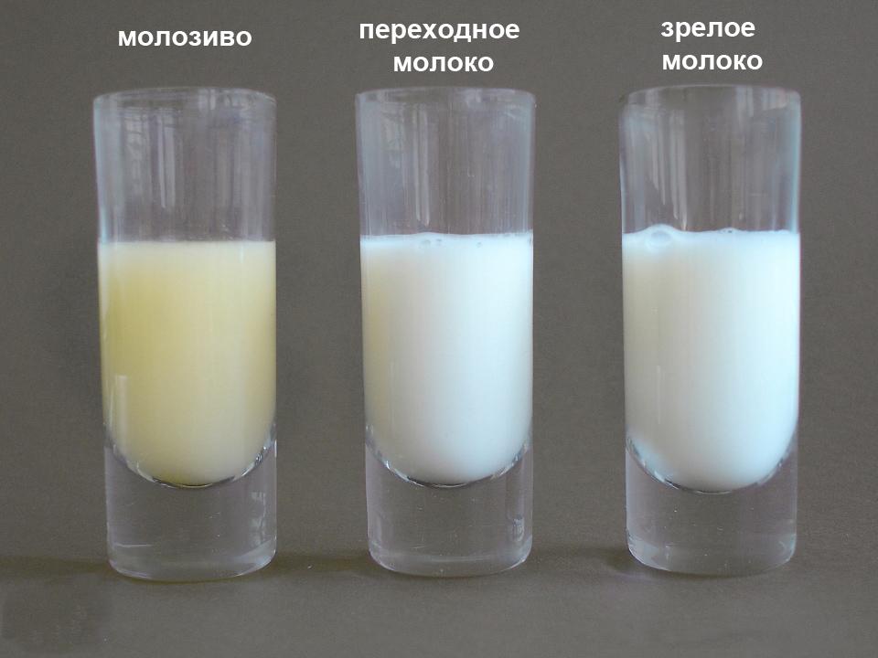Как сделать чтобы не было застоя молока 16