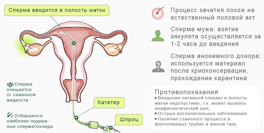 Если женский организм не получает спермы конечно