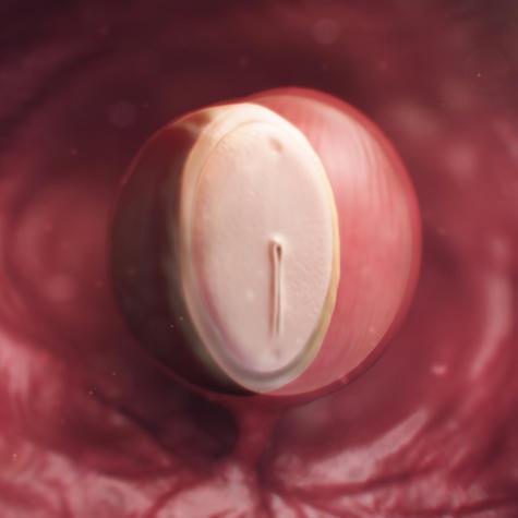появление эмбриона на 4 неделе беременности