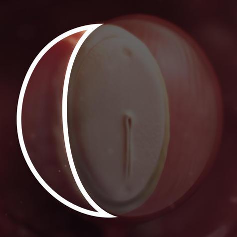 Желточный мешок эмбриона