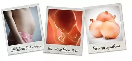 живот на 17 неделе беременности