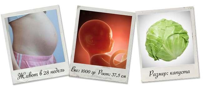 живот на 28 неделе беременности