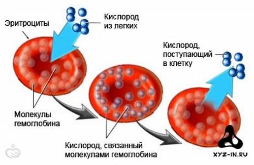 Анемия у беременных при снижении гемоглобина в крови