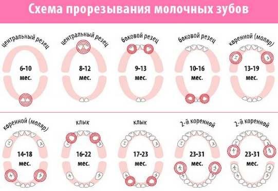 Порядок прорезывания зубов у грудничка