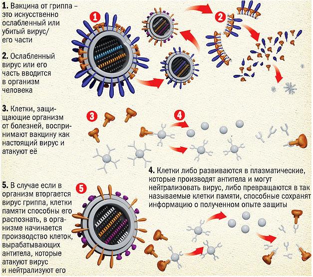 Типы вакцин