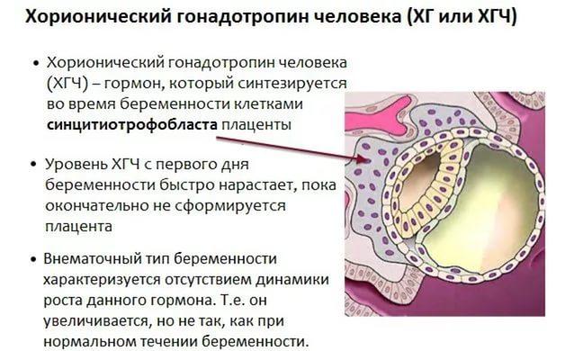 Что такое ХГЧ при беременности