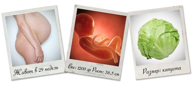 живот на 29 неделе беременности