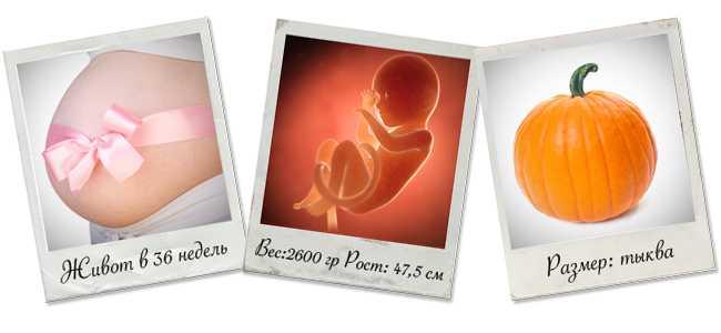 36 недель беременности вес и рост ребенка
