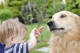 боязнь собак у детей в 1 год и 4 месяца