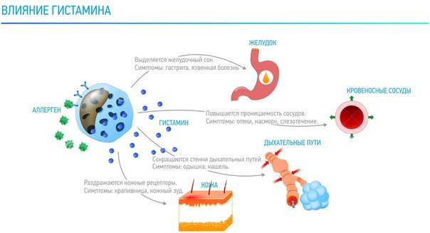 Гистамин усиливает иммунный ответ организма