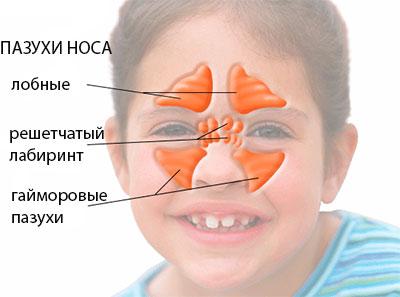 Пазухи носа